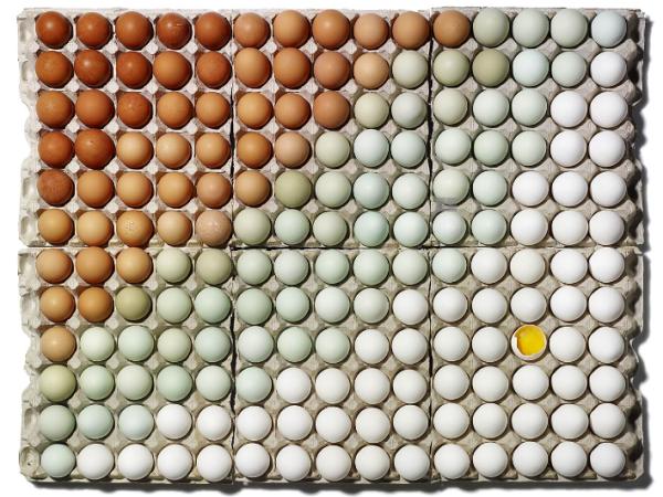 EGGS GRADIANT, photo by Sam Kaplan - via Patternity