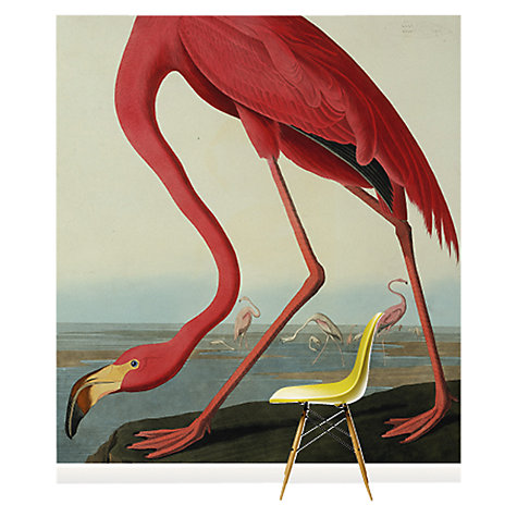 Surface View John Lewis - Greater Flamingo Wall Mural, £300