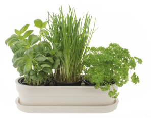 Herbivore Planter, £45 from Theo Theo