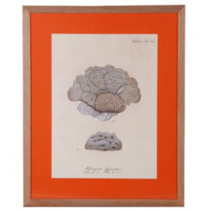 Orange Framed Print, £250 from Graham  Green