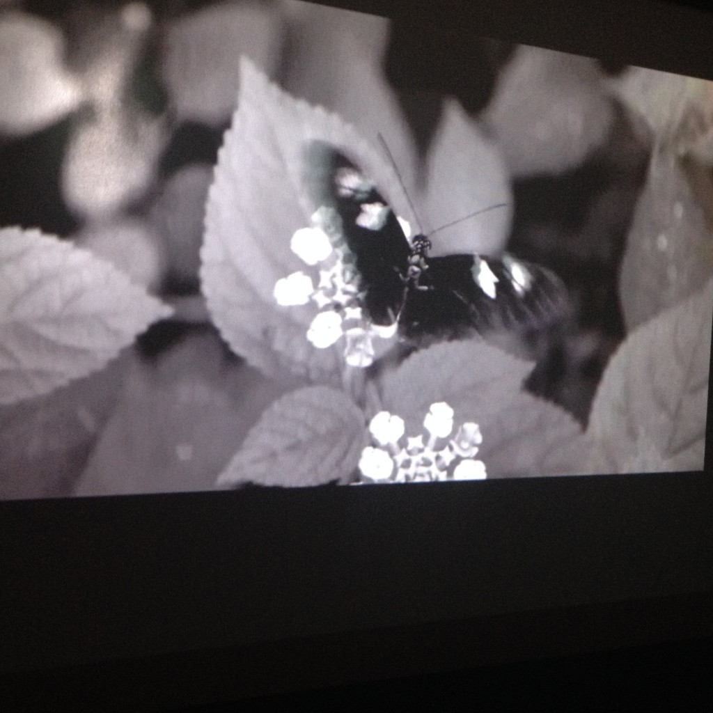 Video installation to accompany Simon Pengellys Wing dining table