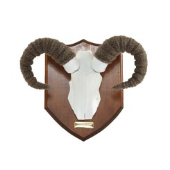 The_Tab_Collective_-_Welcome_Worsted_Ram_horns_by_Emma_Cocker_165_1024x1024